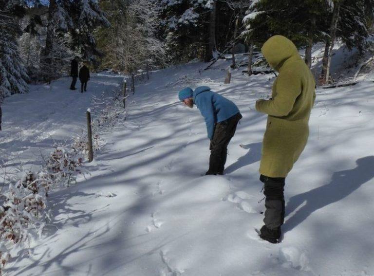 spurenlesen-im-schnee-bayerischer-wald-angebote-einszueins