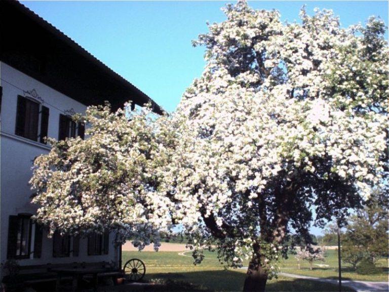 seminarhof-naturoase-feldkirchen-westerham